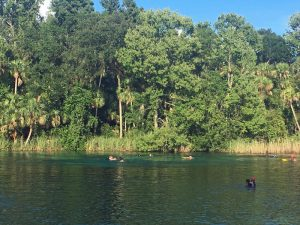 Get away from crowds in Florida in the national forests