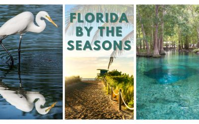 Best time to visit Florida? Where to go every season