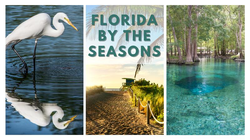 Where to go in Florida every season